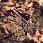 Waldeidechsen (Lacerta vivipara) sehen wir eigentlich auf jedem Naturspaziergang. Sie sind scheu und gut getarnt, aber wenn man still ist und gut hinschaut, sieht man sie.